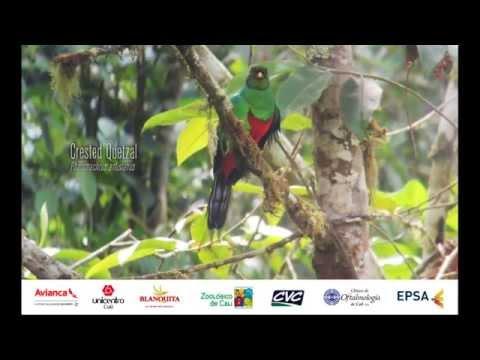 Feria Internacional de las Aves en Cali - Colombia Birdfair 2015