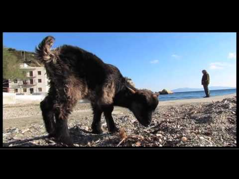 Walking the pet Goat in Therma,Ikaria