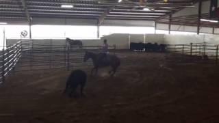 Visa- Jared Lesh Cowhorses