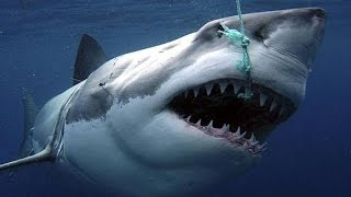 Sharks : Scavengers of the Seas - Documentary