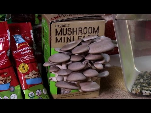 Back to the Roots-mushrooms to millions