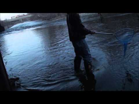 Metro Milwaukee Steelhead Fishing