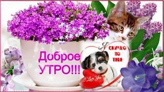 🌈С Добрым красивым утром тебя 👍🌹Пожелания в доброе утро 🌈С ДОБРЫМ УТРЕЧКОМ!