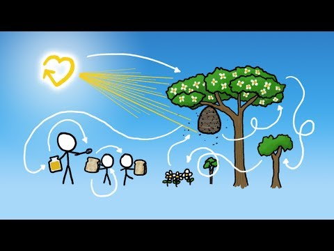 How Our Honey Is Made  &amp  Subbable Announcement