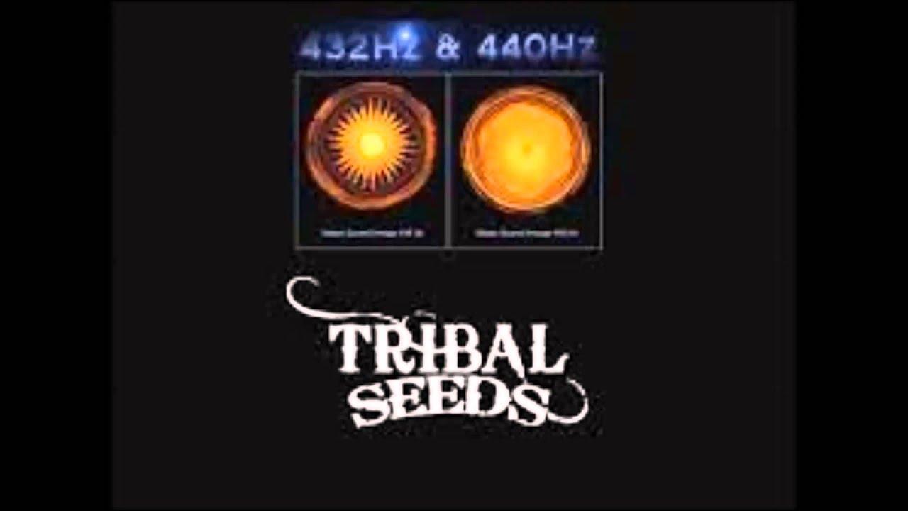 Tribal Seeds Wallpaper Tribal Seeds Tulasi 432