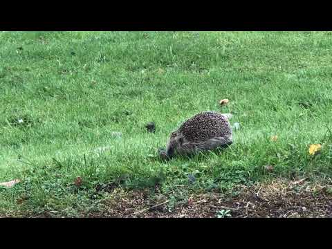 Well Hello Mr Hedgehog