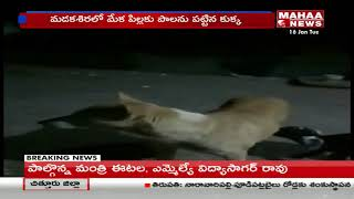 Dog gives Milk to Goat's kid in Anantapur Dist