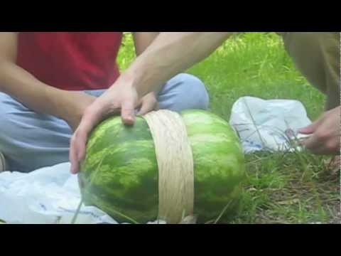 Rubber Bands vs. Watermelon