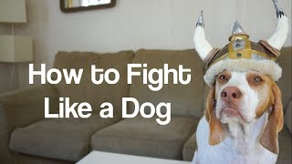 How to Fight Like a Dog with Cute Dogs Maymo & Penny