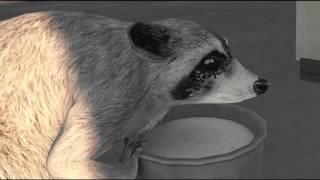 Racoon on LINC