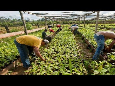 Curso Produção de Mudas Frutíferas - Propagação por Sementes