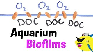 Aquarium Biofilms: Learn About, Prevent and Eliminate
