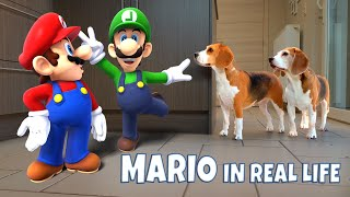 MARIO vs FUNNY DOGS In REAL LIFE ANIMATION COMPILATON