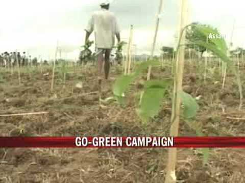 Assam village goes green, sets record