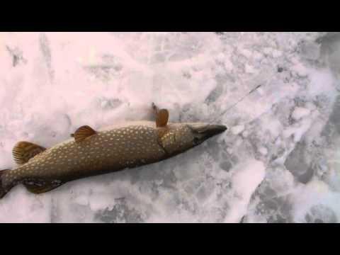 рыбалка на битике