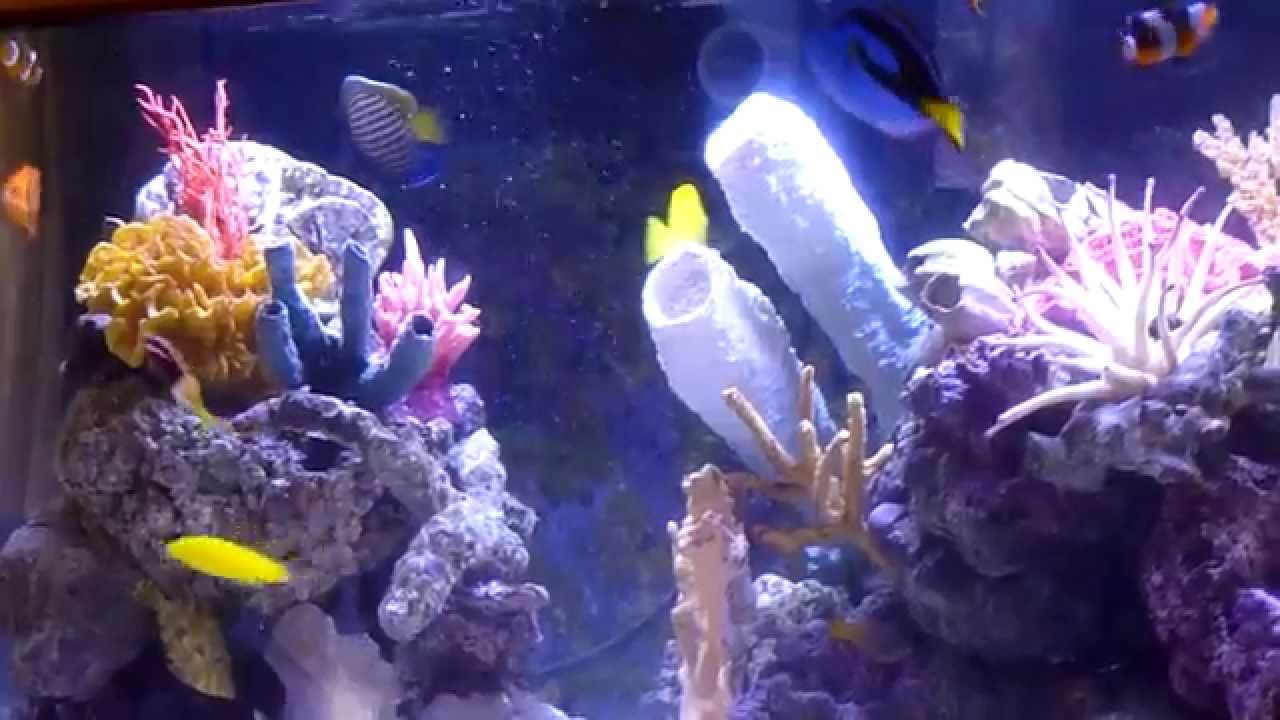 Saltwater Aquarium - Colorful fish and corals - YouTube