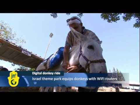 Israel Donkeys With Onboard Wifi At Galilee Tourist Theme Park: Wireless Routers At Kfar Kedem video
