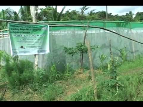 GorillaPosition.com - Sustainable Community-based Commercialization of Organic Vegetables Part 1