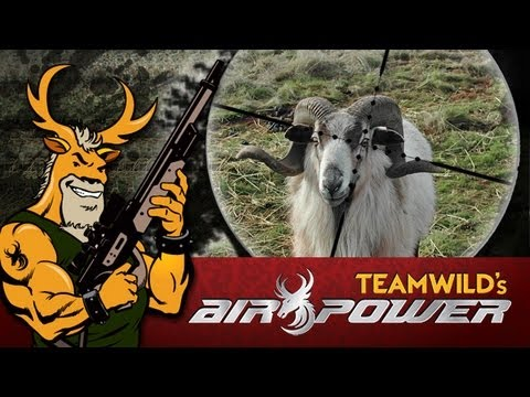 Extreme Airgun Hunting: Barbados Ram with a Benjamin Rogue .357 Big Bore Air Rifle