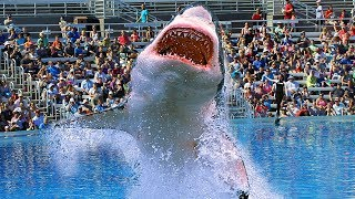 This Is Why NO Aquarium In The WORLD Has A Great White Shark!