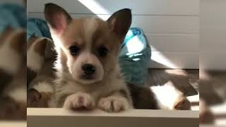 Cute and Funny Puppies Compilation | 2019