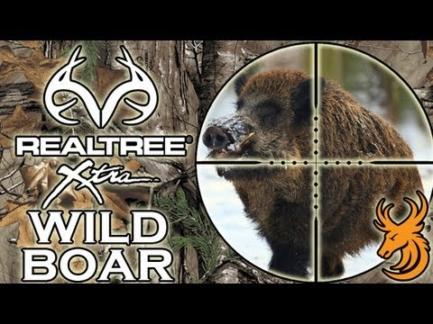 Driven Wild Boar Hunt - Czech Republic video