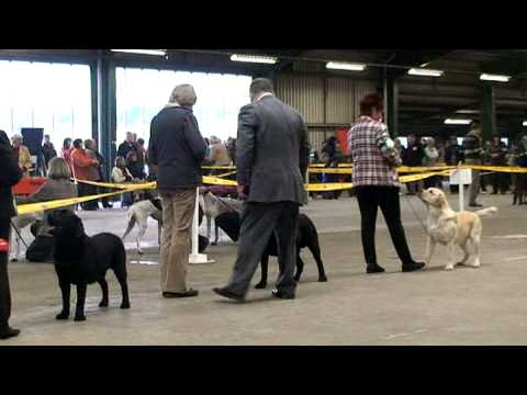 Boston Champ Show 2009 Labrador Dog CC Judging