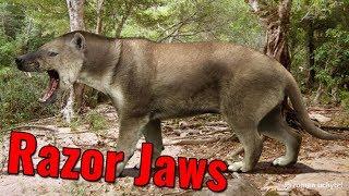 Hyaenodon's Razor Jaws
