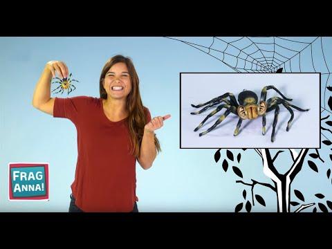 Kinder fragen, Anna antwortet |  Spinnen, Schuhschnabel, Faultier  | Frag Anna!