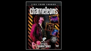 Watch Chameleons A Person Isnt Safe Anywhere These Days video