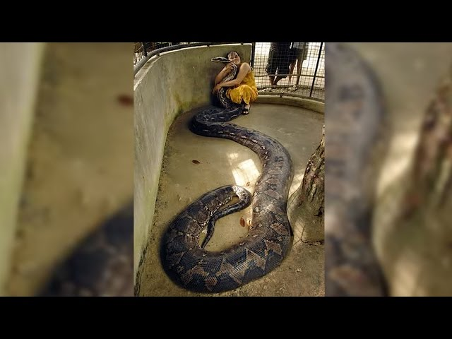Woman Is Best Friends With Giant Snake