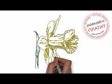 Как нарисовать незабудку карандашом поэтапно для начинающих