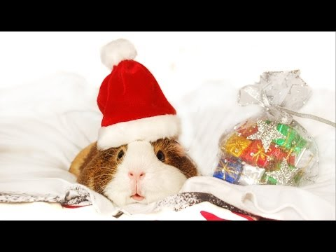 Happy Holidays - Pets Add Life And Talking Animals