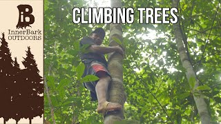 Climbing Trees: Life In The Amazon Jungle