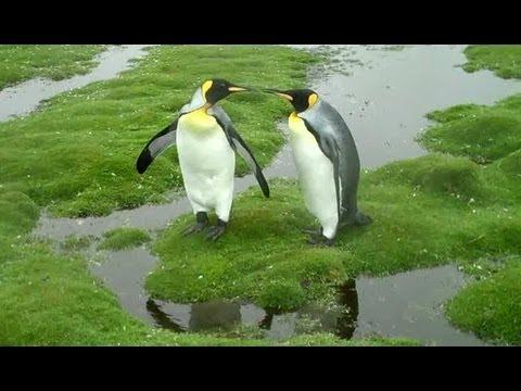 ペンギンたちの過酷な旅