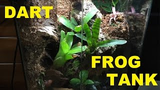 BUILDING A DART FROG TANK!!
