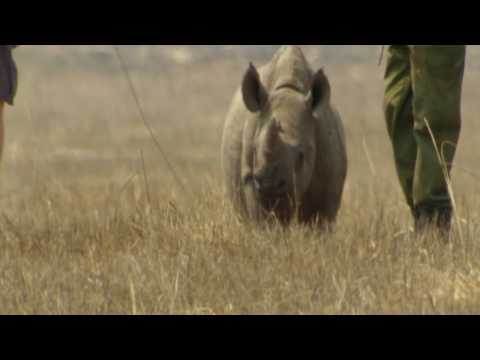 Help Save the Black Rhino