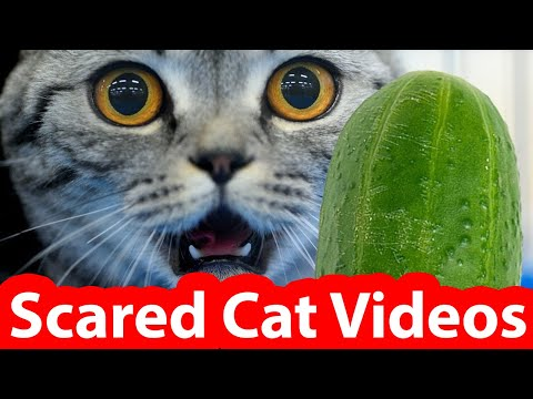 Epic Scared Cats Video Compilation