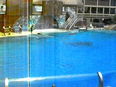 Killer Whales @ Sea World-San Diego,CA