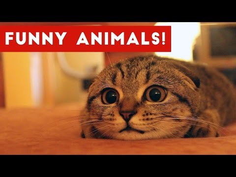 Funniest Animal Home Video Bloopers & Outtakes January 2017 | Funny Pet Videos