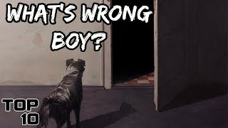 Top 10 Scary Times Dogs Sensed Evil