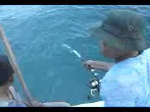 Mancing Ikan Besar Mancing Ikan Gabus Laut
