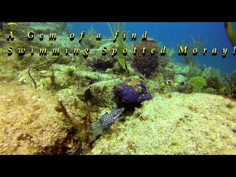 BVI - Angelfish Reef & Indians w/ Sail Caribbean Divers
