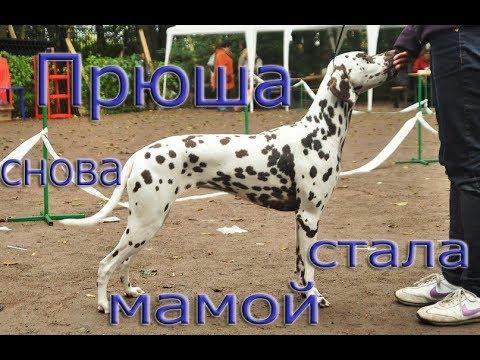 Прюша, снова стала мамой)))))