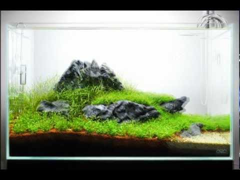 The Power of ADA - 60-P Nature Aquarium