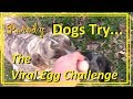 Dogs Try the Viral Egg Challenge Parody MP3