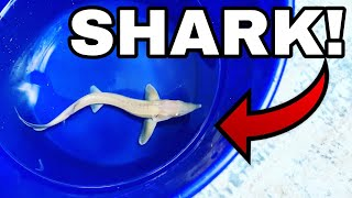 One of a Kind ALBINO BABY SHARK Gets New HOME AQUARIUM In FRESHWATER!