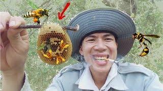 Thử Thách Bắt Tổ Ong Rừng Kỳ Lạ .Suýt Bị Ong Đốt Sưng Mặt .Catch Bee .Công Việc Nguy Hiểm Nhất Thế G