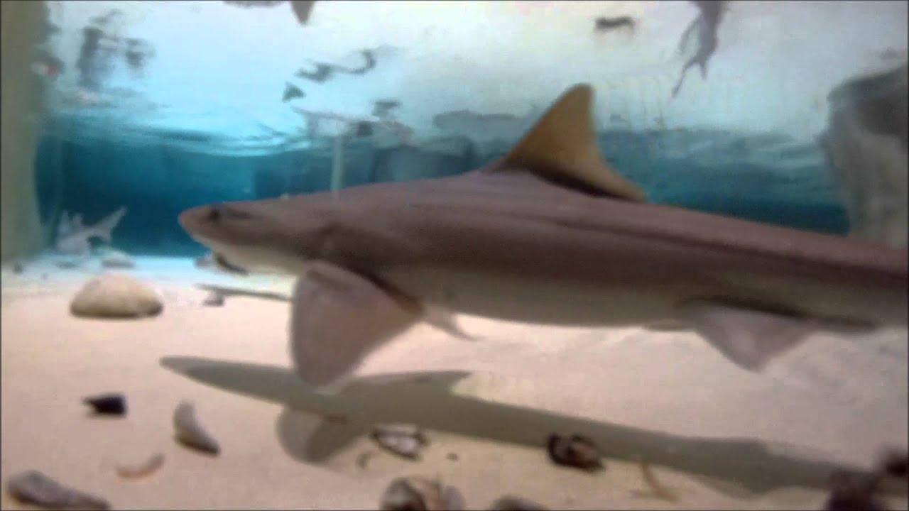 Sea Animal Wildlife Life Underwater Undersea Close Up Nature Shark Sharks Tank
