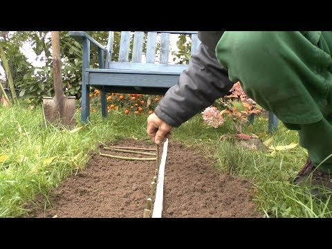 Pflanzen Vermehrung Teil 7.1. Steckholz (Weidentunnel). Gärtnertipp Instructions